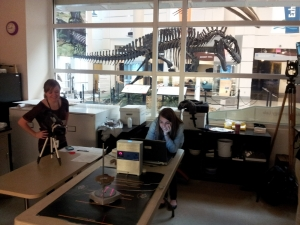 Ashley and Mariana scan artifacts under the watchful gaze of a reconstructed dinosaur skeleton.