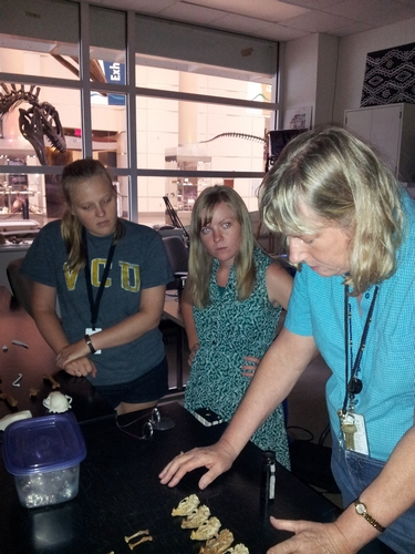Dr. Moncrief discusses how to tell Gray squirrels from Eastern Fox squirrels with Lauren and Ashley.