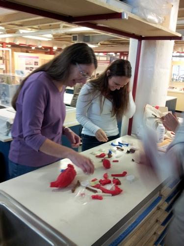 Examining plastic replicas.
