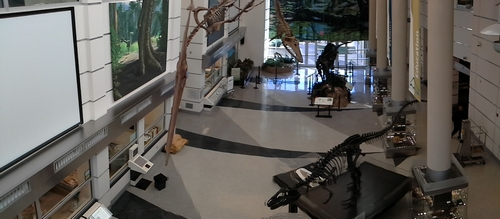 Panoramic view of the main exhibit hall at VMNH.