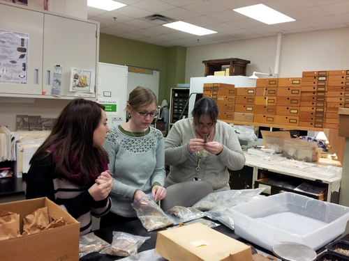 Mariana Zechini, Rachael Hulvey, and Dr. Elizabeth Moore examine animal bone remains for butchering marks.