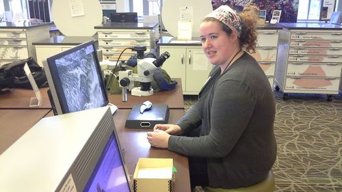 Hannah Lickey examines a giant groundsloth fossil claw