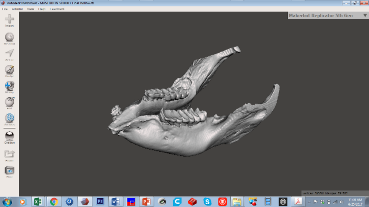 bkm_ct scan mastodon jaw