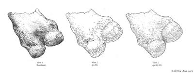 bkm_mastodon femur sample